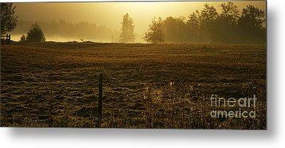 Morning Glow Metal Print by Terrie Taylor