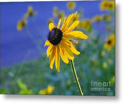 Metal Print featuring the photograph Morning Light by Nava Thompson