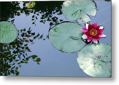 Metal Print featuring the photograph Morning Lilly by Dan Menta