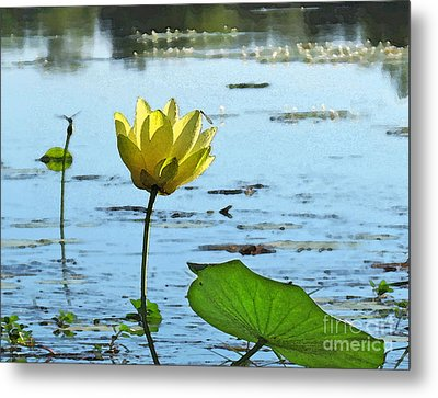 Metal Print featuring the photograph Morning Lotus Pond by Deborah Smith