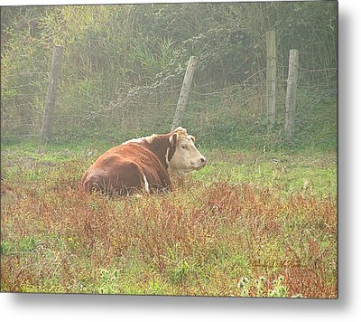 Metal Print featuring the photograph Morning Moo by Wendy McKennon