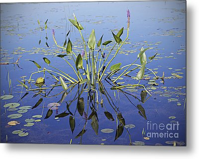 Metal Print featuring the photograph Morning Reflection by Eunice Gibb