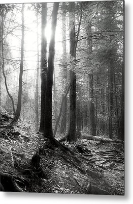 Metal Print featuring the photograph Morning Sun by Mary Almond
