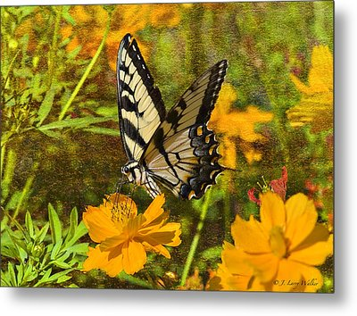 Morning Tiger Swallowtail Metal Print by J Larry Walker