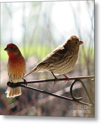 Morning Visitors 2 Metal Print by Rory Sagner