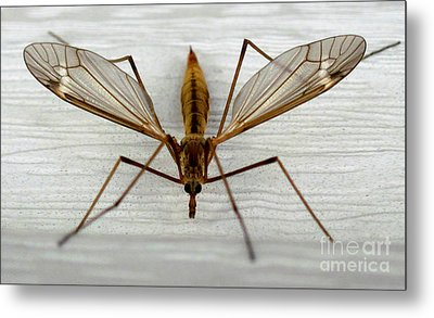 Mosquito Hawk Metal Print by The Kepharts