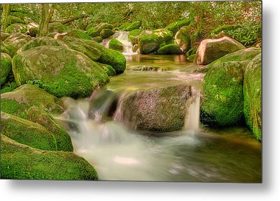 Metal Print featuring the photograph Mossy Beauty by Cindy Haggerty