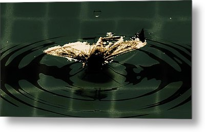 Metal Print featuring the photograph Moth Ripples by Jessica Shelton