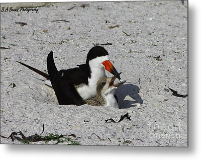 Mother And Baby Black Skimmer Metal Print by Barbara Bowen