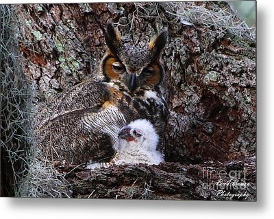 Mother And Baby Owl Metal Print by Barbara Bowen
