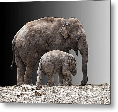 Mother And Baby Metal Print by Sheila Laurens