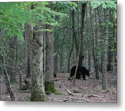 Mother Bear And Cub In Woods Metal Print by Kathy Long