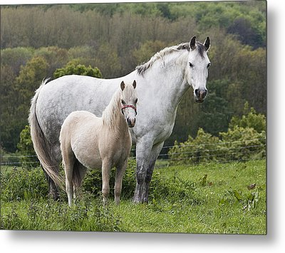 Mother Horses And Baby Horses Metal Print by DSW Creative Photography