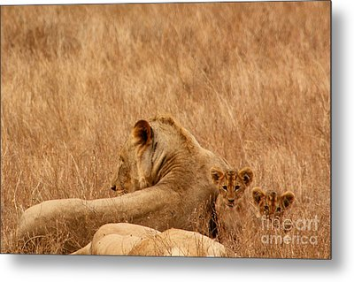 Mother Lion With Family Metal Print
