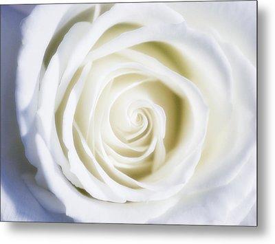 Mother's White Rose Metal Print