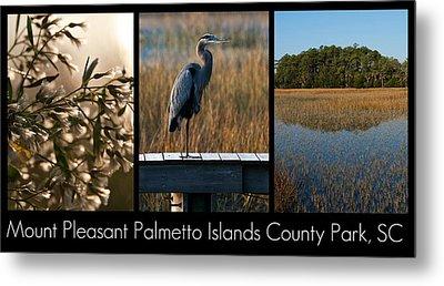 Mount Pleasant Palmetto Islands County Park  Metal Print by Melissa Wyatt