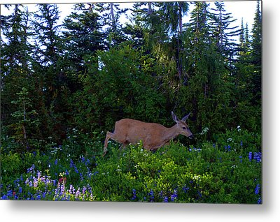 Mount Rainier Deer Metal Print