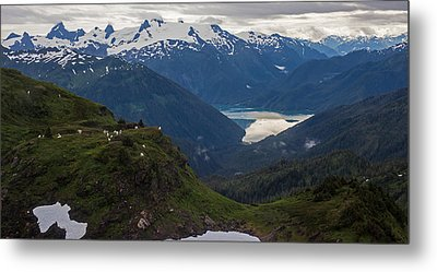 Mountain Flock Metal Print by Mike Reid
