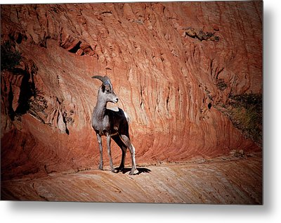 Metal Print featuring the photograph Mountain Goat Zion National Park by James Bethanis
