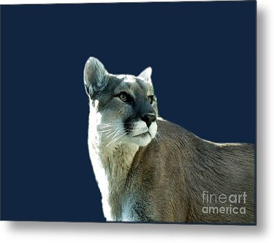 Mountain Lion Beauty Metal Print by Donna Parlow