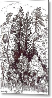 Mountain Pines And Aspen Field Sketch Metal Print by Dawn Senior-Trask