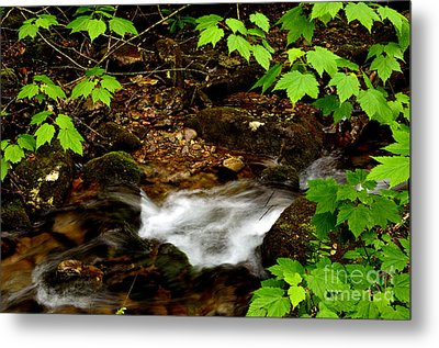 Mountain Stream In Spring Metal Print by Thomas R Fletcher
