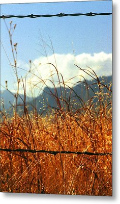 Mountain Wheat With Barbwire Metal Print by Jaye Crist