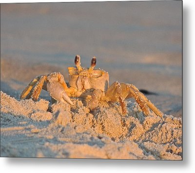 Mr. Crabby Metal Print by Eve Spring
