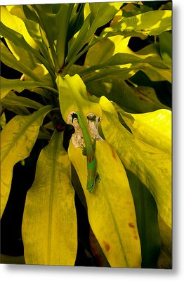 Metal Print featuring the photograph Mr Gecko by Randy Sylvia