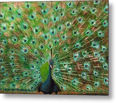 Mr. Peacock Metal Print by Sherry Robinson