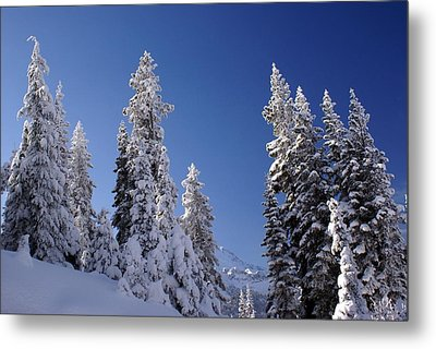 Metal Print featuring the photograph Mt. Rainier's Christmas Tree's by Rob Green