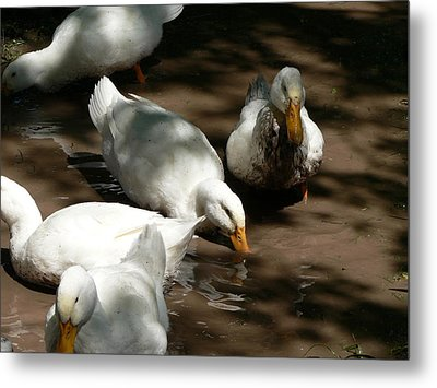 Metal Print featuring the photograph Muddy Ducks by Laurel Best