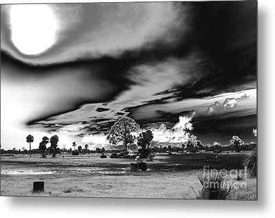 Mudjam In Black And White  Metal Print by Don Youngclaus