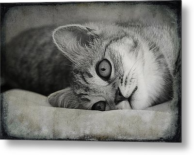 Muffin Metal Print by Claudia Moeckel