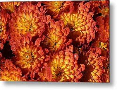 Mums Of A Different Color Metal Print by Bruce Bley