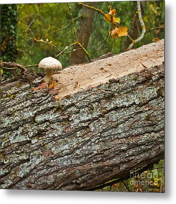 Mushroom's Tree Metal Print by Nabucodonosor Perez