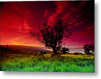 Metal Print featuring the photograph My Backyard by Randy Sylvia