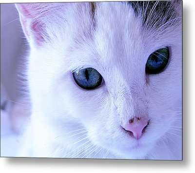 My Blue Cat Metal Print by Guadalupe Nicole Barrionuevo