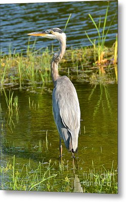 My Blue Heron II Metal Print by Carol  Bradley
