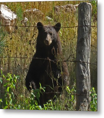 My Capture In Beulah Today Metal Print by Tammy Sutherland