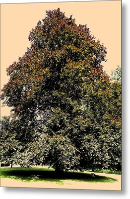 My Friend The Tree Metal Print by Juergen Weiss