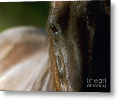 Metal Print featuring the photograph My Neigh-bor's Horse by Doug Herr