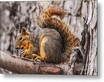 My Nut Metal Print
