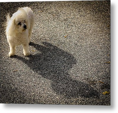 Metal Print featuring the photograph My Shadow by Patrice Zinck