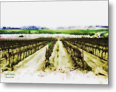 Metal Print featuring the photograph My Well-beloved Had A Vineyard by Itzhak Richter