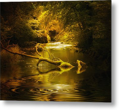 Mystery In Forest Metal Print by Svetlana Sewell