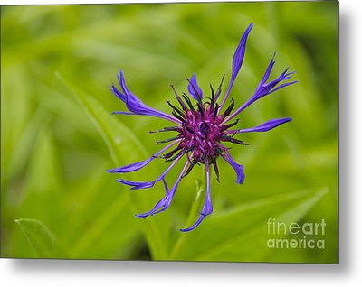 Mystery Wildflower 1 Metal Print by Sean Griffin