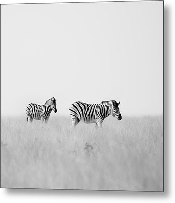 Namibia Zebras I Metal Print