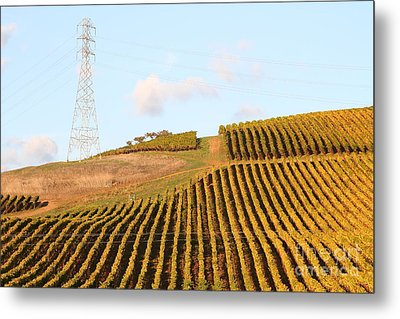 Napa Valley Vineyard . 7d9066 Metal Print by Wingsdomain Art and Photography