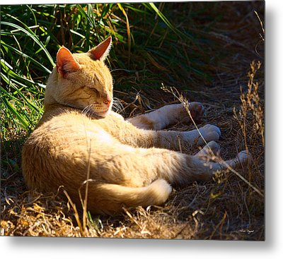 Metal Print featuring the photograph Napping Orange Cat by Chriss Pagani